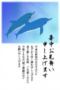 イルカ 業務用
