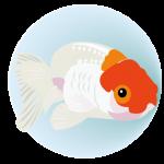 金魚(PNG)