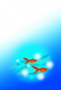 金魚 無地