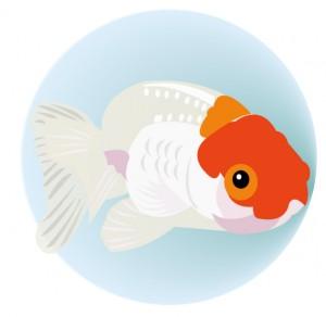 金魚(JPEG)