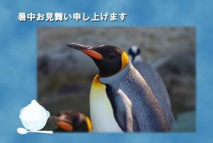 ペンギン写真入りー暑中見舞い